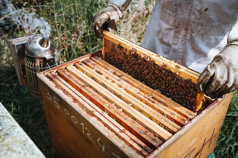 femme apiculture cherche homme sites de rencontre kinshasa